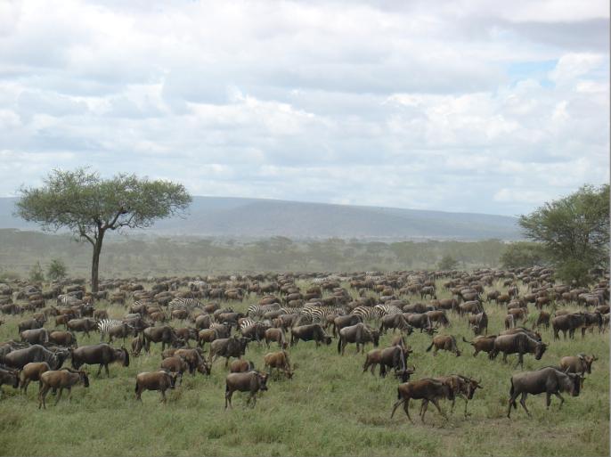 Serengueti 1
