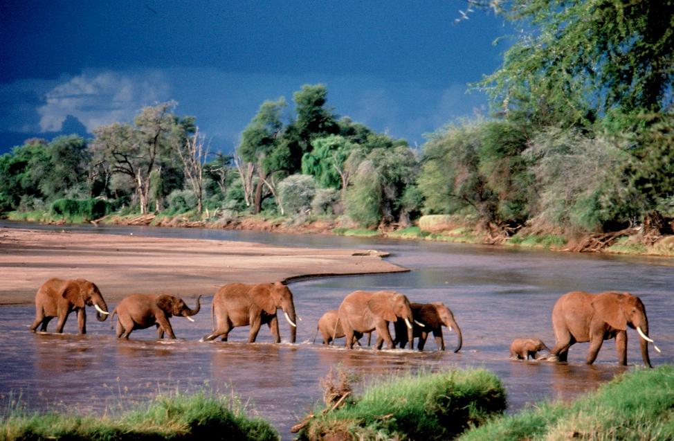 elefantes cruz rio web