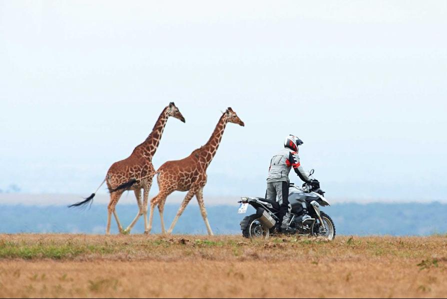 moto y jirafa web